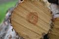 Skogsåkerierna drabbas av krisande skogsnäring