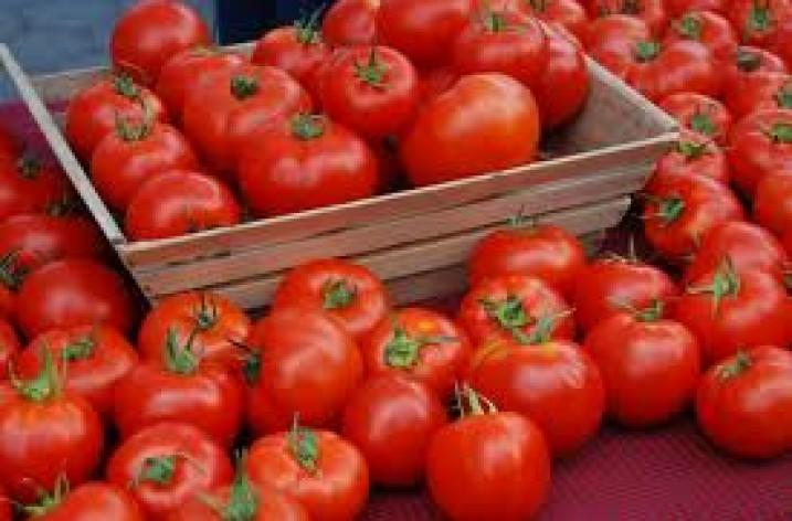 Mindre klimatpåverkan av spanska tomater